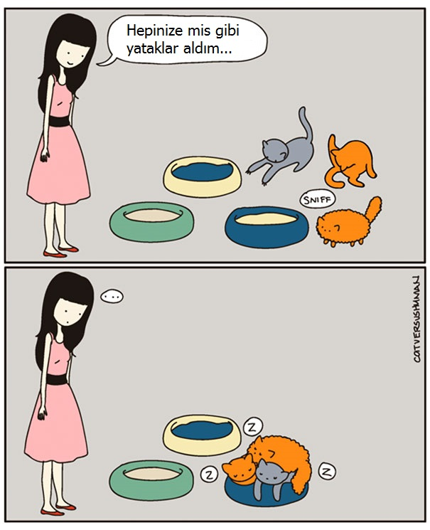 kedilerle-yasamak-nasildir-patiliyo-10