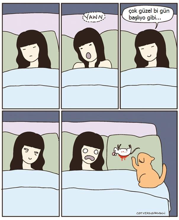 kedilerle-yasamak-nasildir-patiliyo-13