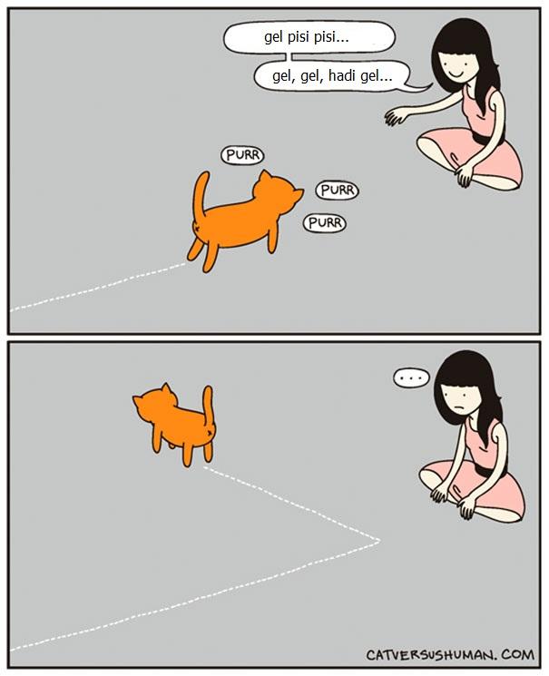 kedilerle-yasamak-nasildir-patiliyo-6