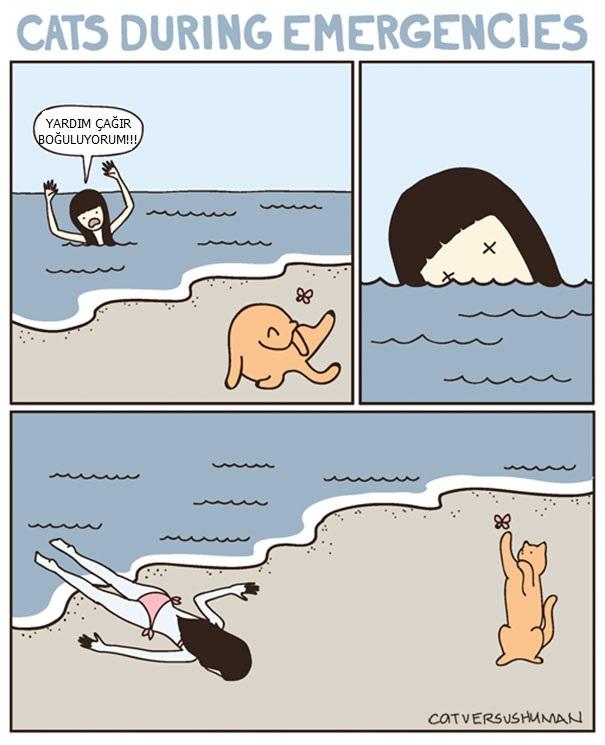 kedilerle-yasamak-nasildir-patiliyo-9