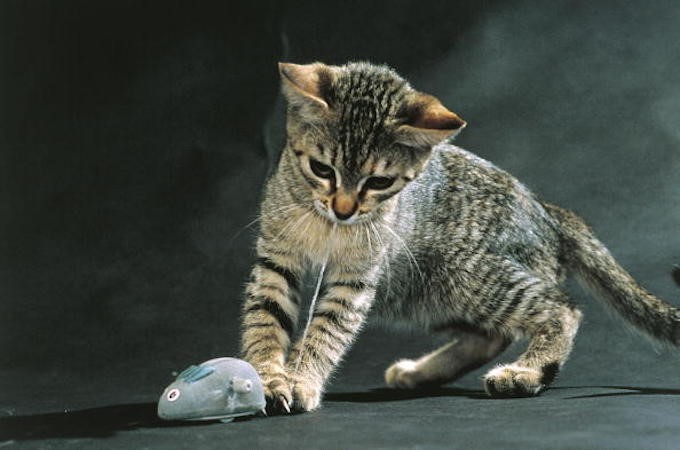 kedim-beni-seviyor-patiliyo-3