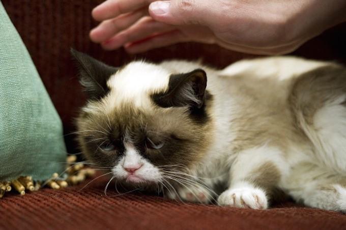 kedim-beni-seviyor-patiliyo-5