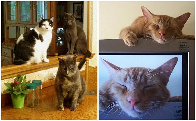 Kedi Olmayan Bir Eve Gittiğinizde Kafanızın Karışmasının 5 Miyavsal Sebebi