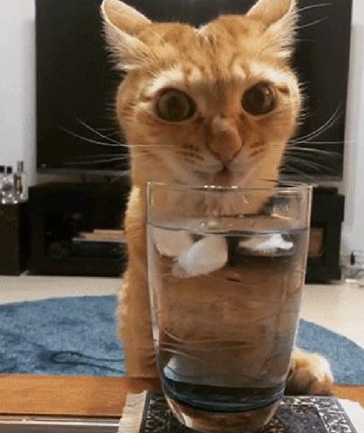 kediyle-yasamak-patiliyo-4