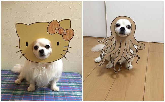 Hazırladığı Kartonlarla Köpeğini Tipten Tipe Sokan Japon Kadından 16 Patisel Şaheser