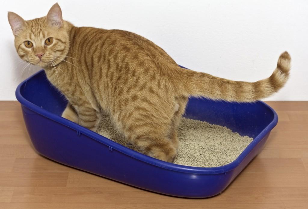 kitten in blue plastic litter cat