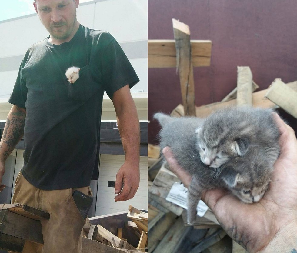 Çöpe Atılan Kedi Kardeşleri 7 Saat Uğraşıp Tahtaların Arasından Kurtaran Adam
