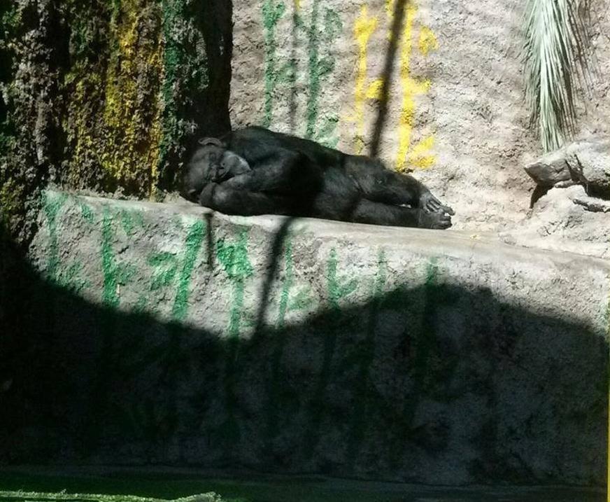 arjantin-hayvanat-bahcesi-yasaklandi-patiliyo-2