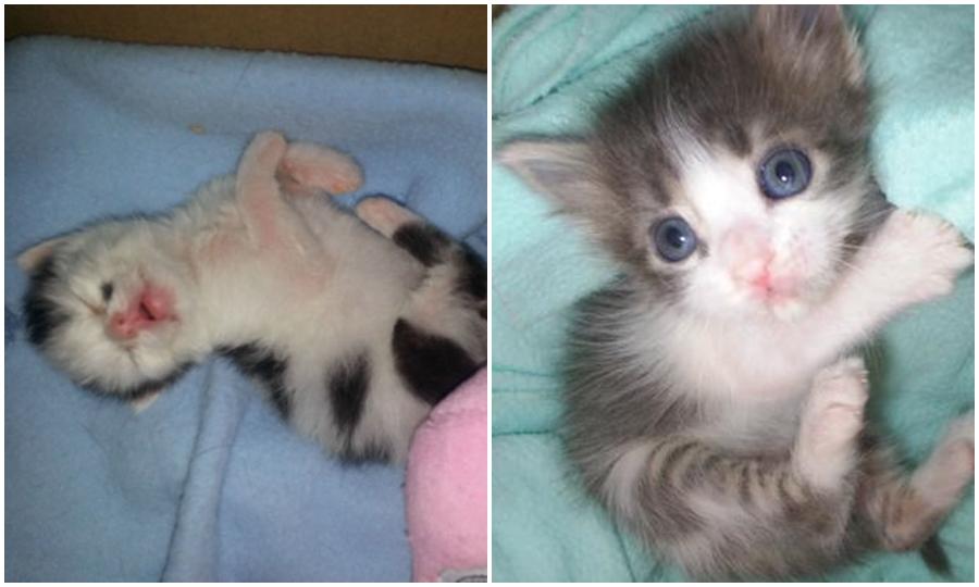 """6 Basit ve Maliyetsiz Adımda """"Yavru Kedi Bakım Kutusu"""" Nasıl Hazırlanır?"""