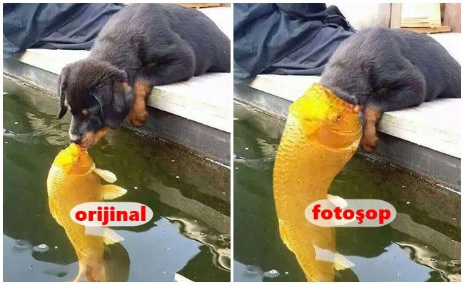 Balığa Öpücük Konduran Yavru Köpek İçin Yapılmış 17 Komiklik Abidesi Fotoşop Çalışması