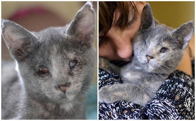 Türkiye'den Hayvan Kurtarma Hikayeleri: Çakır ve Umutlu Bir Yaşam Mücadelesi
