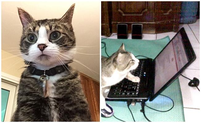 Sahibinin Bilgisayar Şifresini 3 Kere Yanlış Girince Fotoğrafı Çekilen Şapşal Kedi