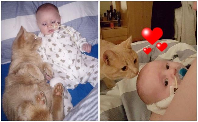 Kalp Rahatsızlığı Bulunan Bebek Kardeşinin Başından Ayrılmayan Abi Kedi