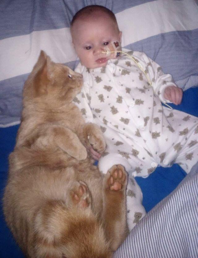 hasta-bebek-kedi-patiliyo-1