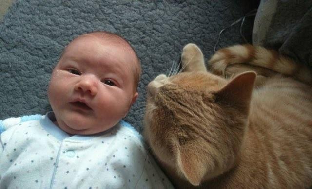 hasta-bebek-kedi-patiliyo-2