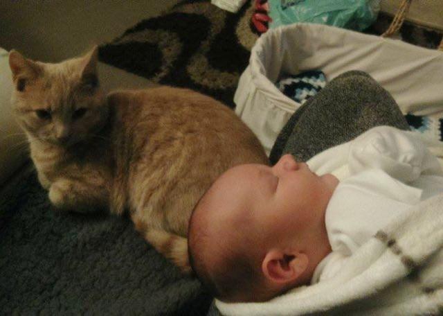 hasta-bebek-kedi-patiliyo-3