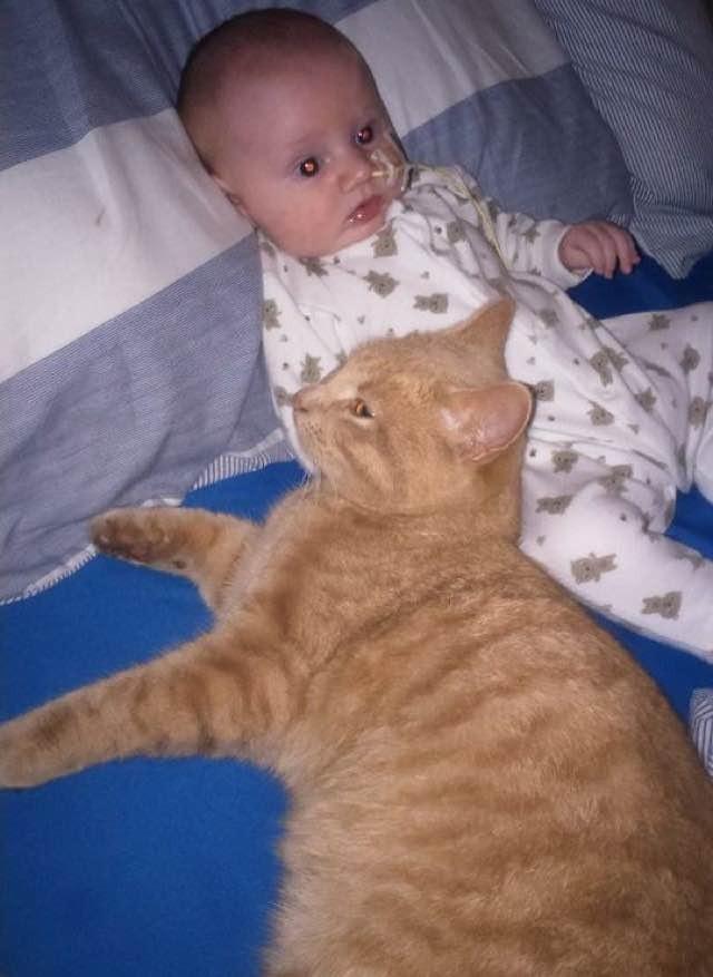 hasta-bebek-kedi-patiliyo-5