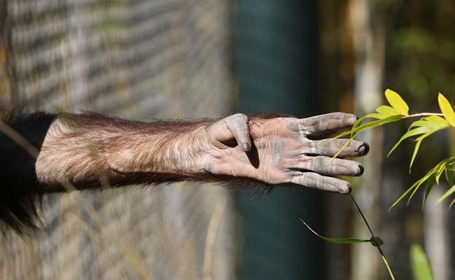 """Arjantin'den Tarihi Karar: """"Hayvanat Bahçeleri Yaşam Hakkına Aykırıdır!"""""""