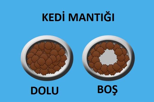 kedi-mantigi-patiliyo-5