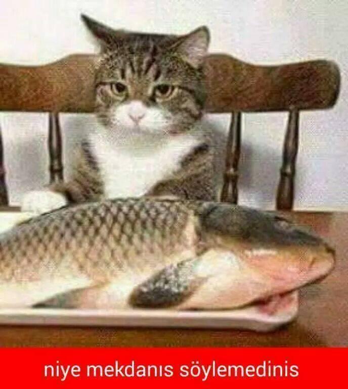 kedi-replikleri-patiliyo-1