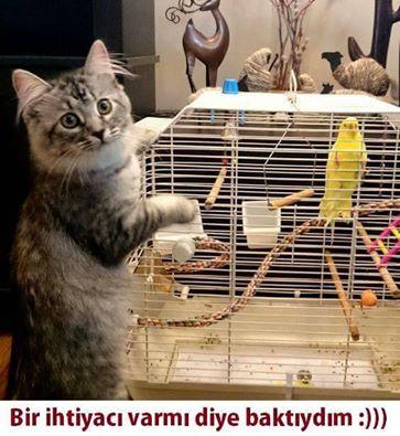 kedi-replikleri-patiliyo-11