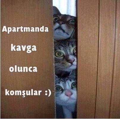 kedi-replikleri-patiliyo-19
