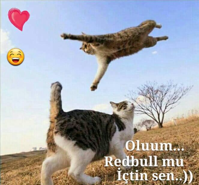 kedi-replikleri-patiliyo-2