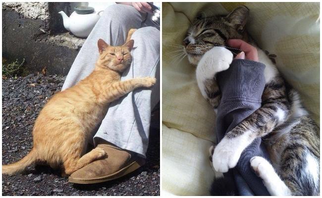 Kedinizin Sizi Deliler Gibi Sevdiğinin 8 Miyavsal İşareti