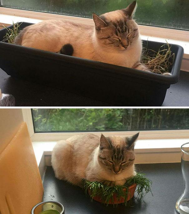 kediler-her-yerde-uyuyabilir-patiliyo-10