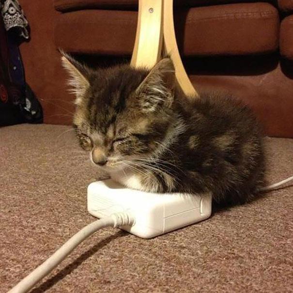 kediler-her-yerde-uyuyabilir-patiliyo-11
