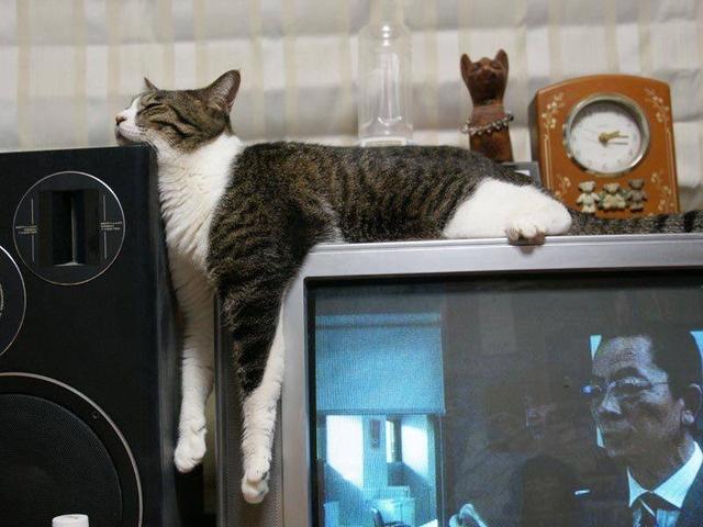 kediler-her-yerde-uyuyabilir-patiliyo-12
