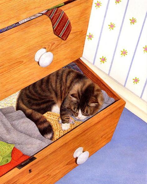 kediler-her-yerde-uyuyabilir-patiliyo-14