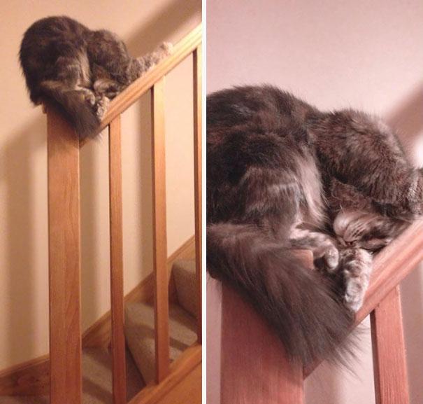 kediler-her-yerde-uyuyabilir-patiliyo-3
