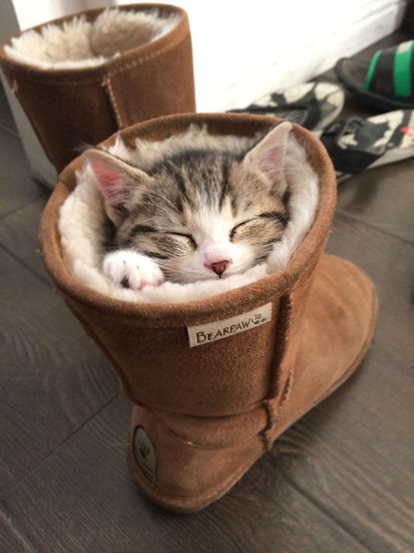kediler-her-yerde-uyuyabilir-patiliyo-6