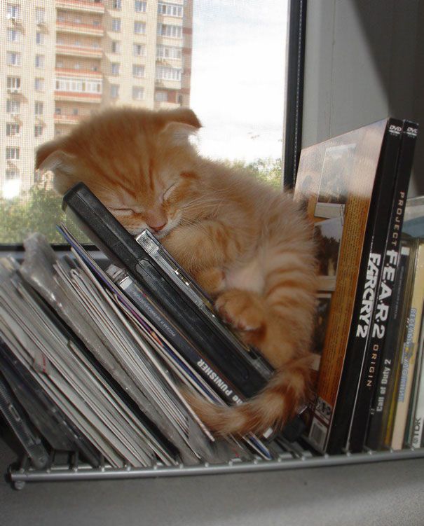 kediler-her-yerde-uyuyabilir-patiliyo-8