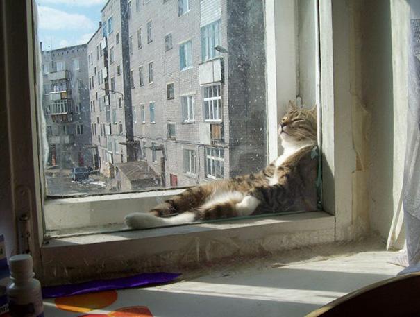 kediler-her-yerde-uyuyabilir-patiliyo-9