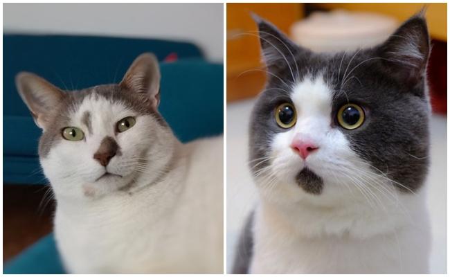 Cevaplıyoruz: Kediler İnsanlar Hakkında Ne Düşünüyor?