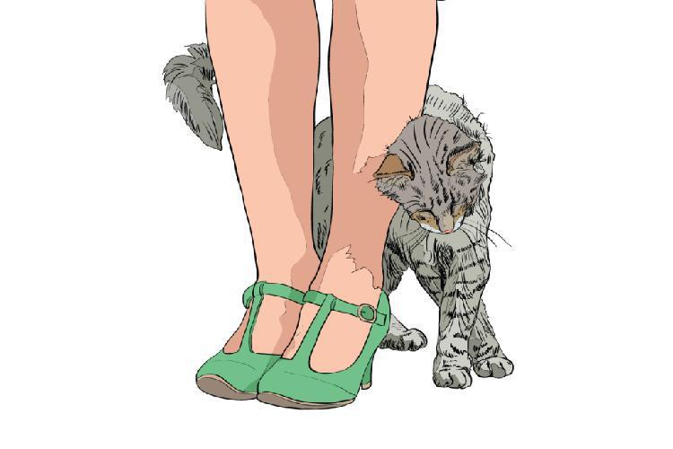 kediler-nasil-asik-olur-patiliyo-4
