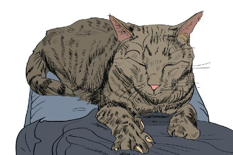 kediler-nasil-asik-olur-patiliyo-5