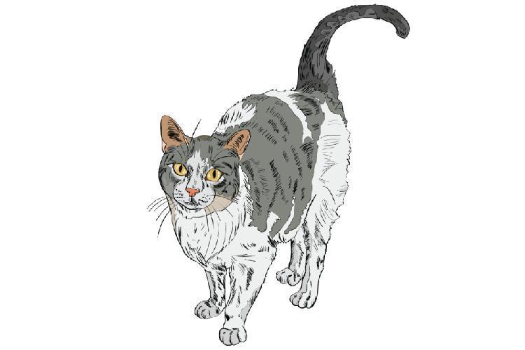 kediler-nasil-asik-olur-patiliyo-6