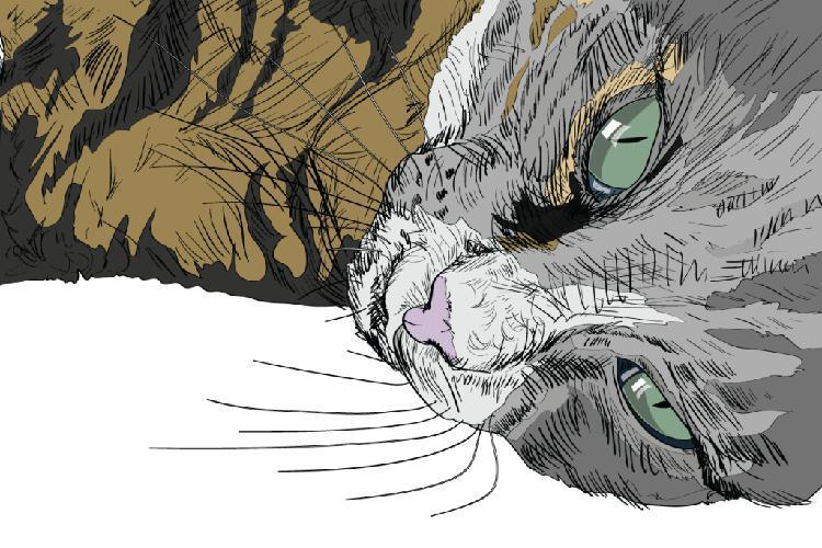 kediler-nasil-asik-olur-patiliyo-7