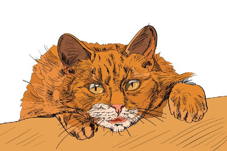 kediler-nasil-asik-olur-patiliyo-8