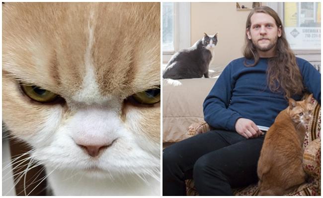 Cevaplıyoruz: Kediler Neden Kıskanır ve Trip Atarlar?