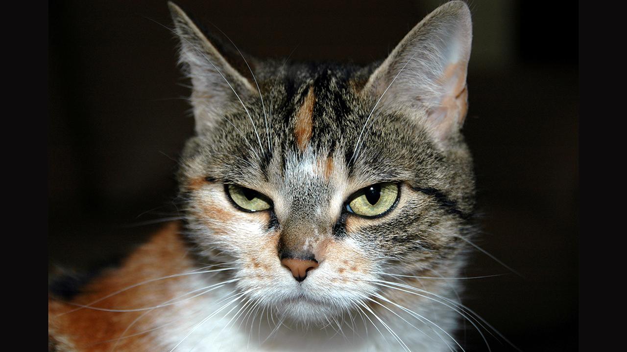 kediler-neden-kiskanir-patiliyo-1