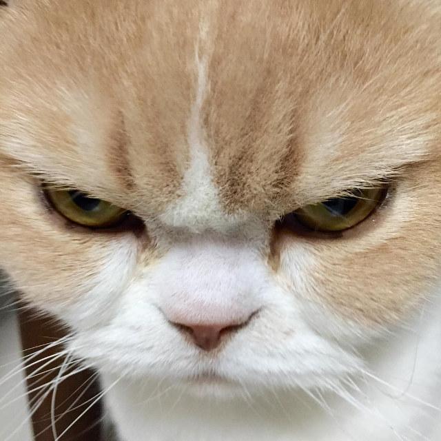 kediler-neden-kiskanir-patiliyo-4
