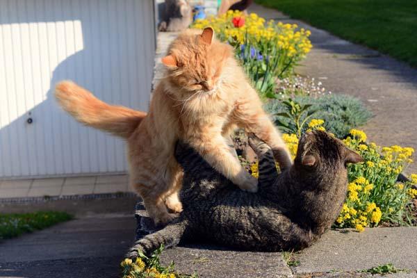 kediler-neden-kiskanir-patiliyo-6