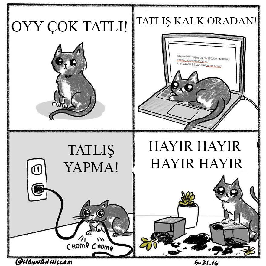 kedili-karikaturler-patiliyo-13