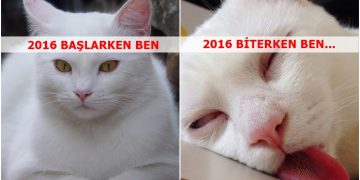"""Öncesi ve Sonrası 18 Fotoğrafla """"2016'nın Başında Kedilerin ve Yılın Sonunda Kedilerin Halleri"""""""