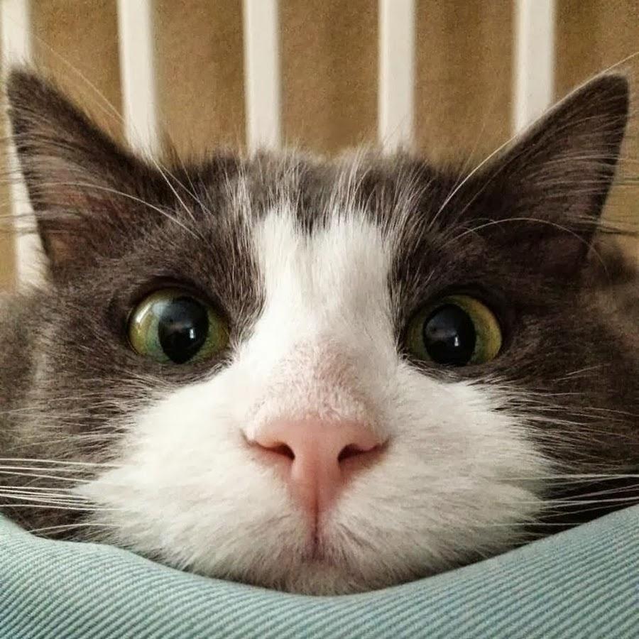 2016-yili-komik-kediler-patiliyo-13