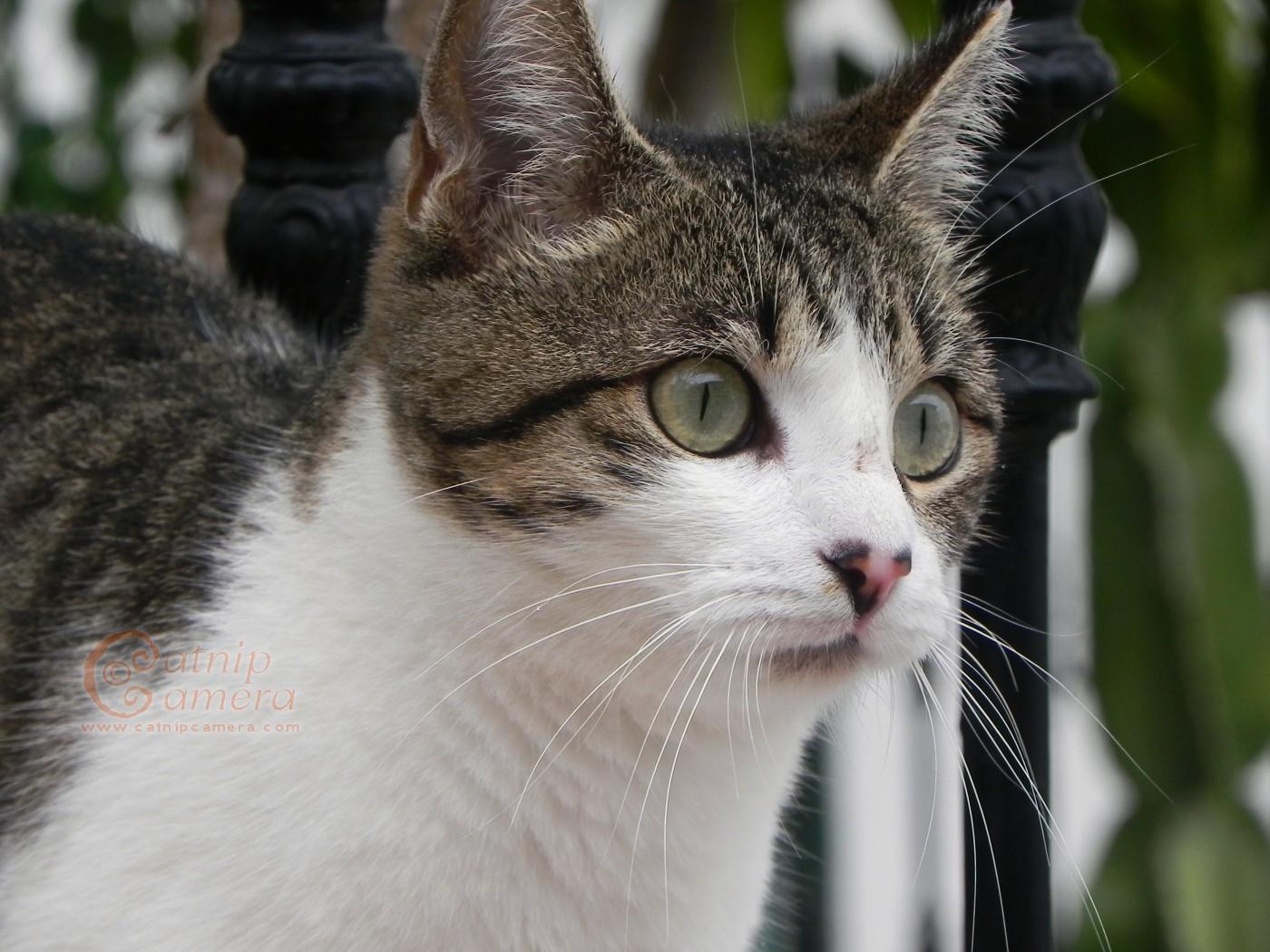 2016-yili-komik-kediler-patiliyo-15